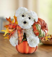 a-DOG-able® for Fall